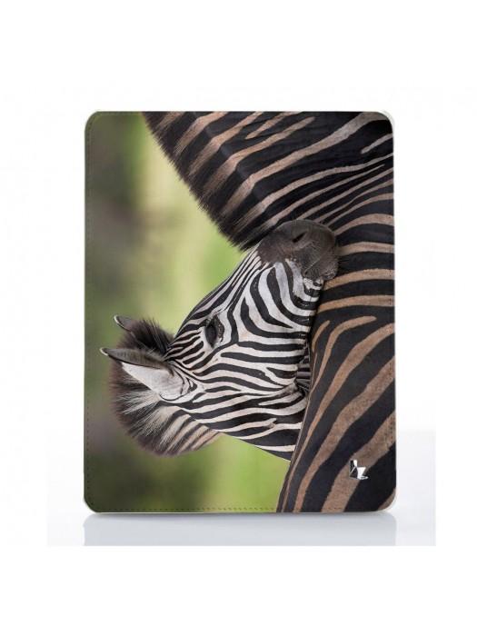 Зебра жеребенок